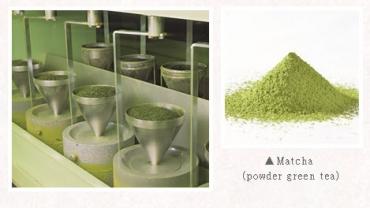 Quy trình sản xuất Bột Matcha Nhật Bản