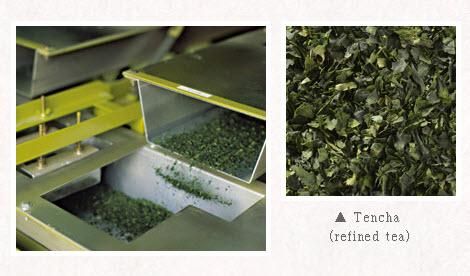 Quá trình sản xuất matcha trà xanh Nhật bản